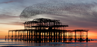 A murmuration of starlings over Brighton Pier. Photo: Philip Reeve/Shutterstock