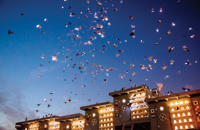Fly by Night, a work involving 1,500 LED-attached pigeons. Photo: Tod Seelie