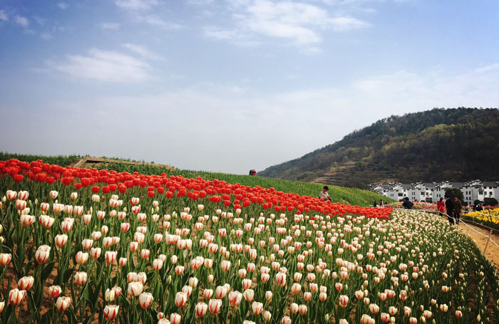 Yue opera town in shengzhou chinas new state of the art hub the flower sea at yue opera town publicscrutiny Images